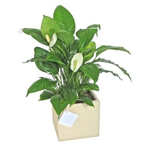 Las Plantas de <q>Tu jardín</q>: Jardines de estilo topical por Flores & Regalos Tu jardin