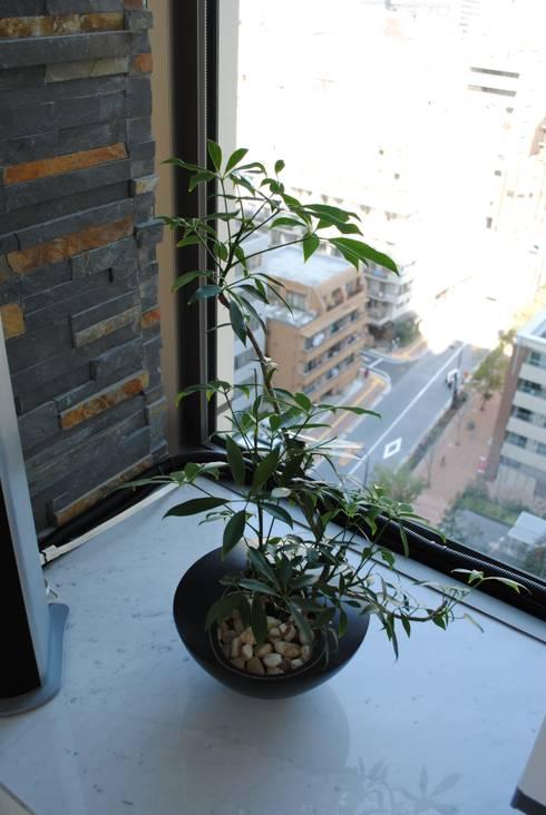 インテリアグリーン シェフレラ: スタイル・モダンが手掛けたリビングルームです。