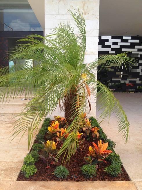 Casa Z-26. Jardín pequeño en acceso: Jardines de estilo  por EcoEntorno Paisajismo Urbano