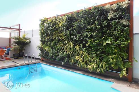 7 detalles para una pared tropical: Paredes de estilo  de Jardineria 7 islas