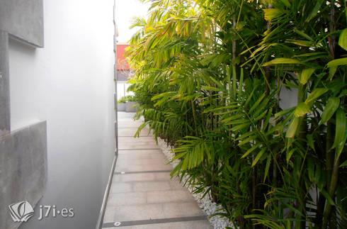 7 detalles para una pared tropical: Jardines de estilo tropical de Jardineria 7 islas