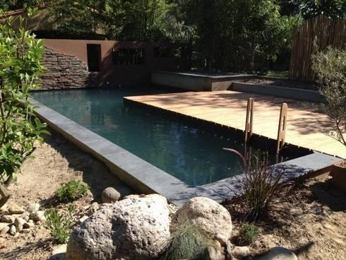 Une piscine biologique dans les pyr n es orientales par for Piscine pyrenees orientales