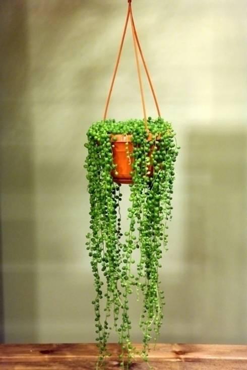 bitki dekor – Senecio rowleyanus: tropikal tarz tarz Bahçe
