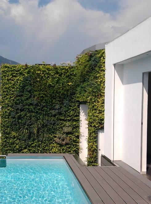 Il giardino verticale in terrazza di sundar italia homify for Giardino verticale