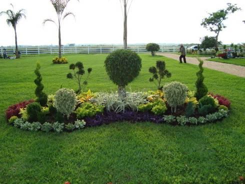 Jardín irregular en forma de cacahuate: Jardines de estilo moderno por Vivero Sofia