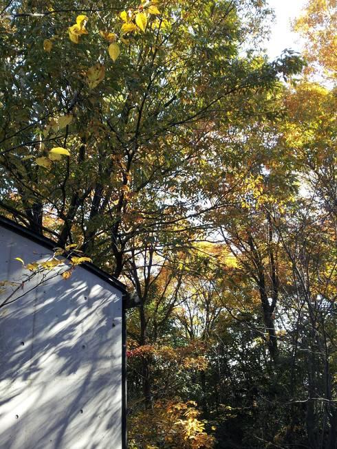 中庭から(秋): MA設計室が手掛けた庭です。