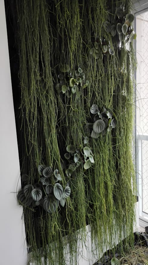 jardim vertical: Jardins tropicais por Top Gardens Paisagismo Vertical