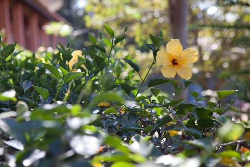Casa de Campo Cabreúva: Jardins campestres por Cactus Arquitetura e Urbanismo