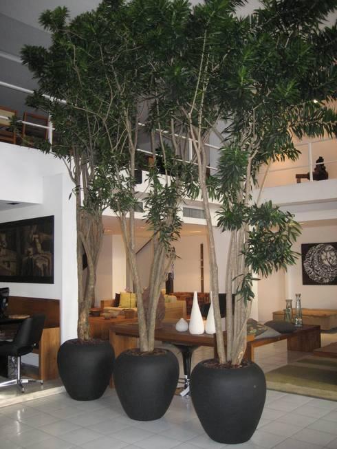 Projekty,  Ogród zimowy zaprojektowane przez Junia Lobo Paisagismo