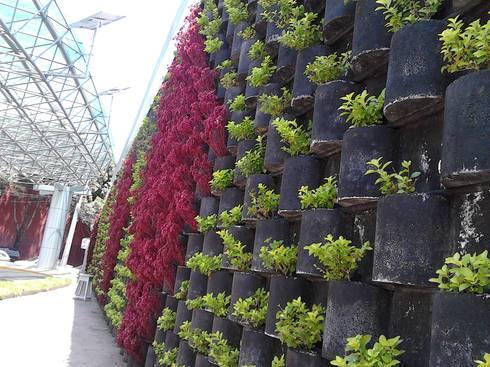 MURO VERTICAL <q> FLORESTA</q>: Jardines de estilo moderno por ENFOQUE CONSTRUCTIVO