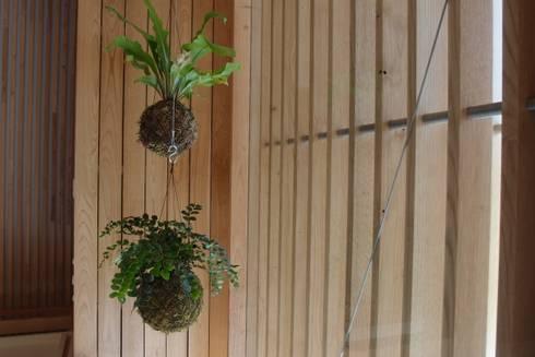 Instalação de plantas suspensas fiu no Hotel Minho: Jardins modernos por fiu jardins, lda.