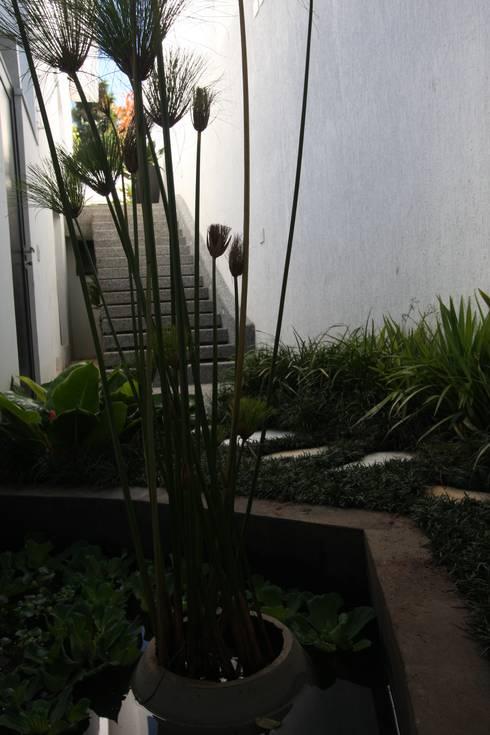 Espelho d'água: Jardins tropicais por HZ Paisagismo