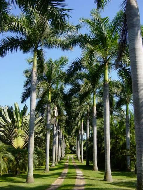 Árboles: Jardines de estilo moderno por Tropical America landscaping
