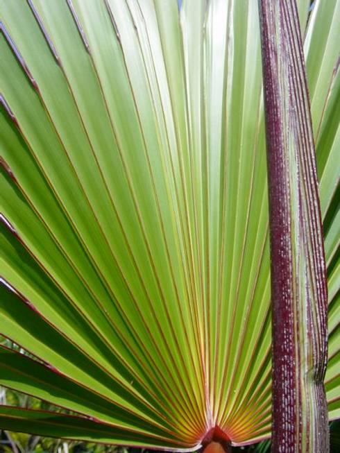 Plantas: Jardines de estilo moderno por Tropical America landscaping