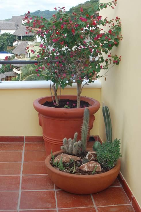 ESPACIOS CON MACETAS: Jardines de estilo topical por Tropico Jardineria