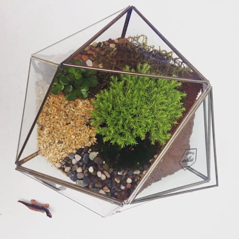 Icosaedro: Hogar de estilo  por Decorería La Suculenta