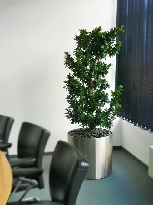 Complessi per uffici in stile  di euflora Begrünungskonzepte
