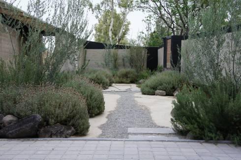 Casa Estudio Sabinos: Jardines de estilo moderno por Juan Carlos Loyo Arquitectura