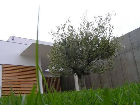 Casa Cubo: Casas modernas por Plano Humano Arquitectos