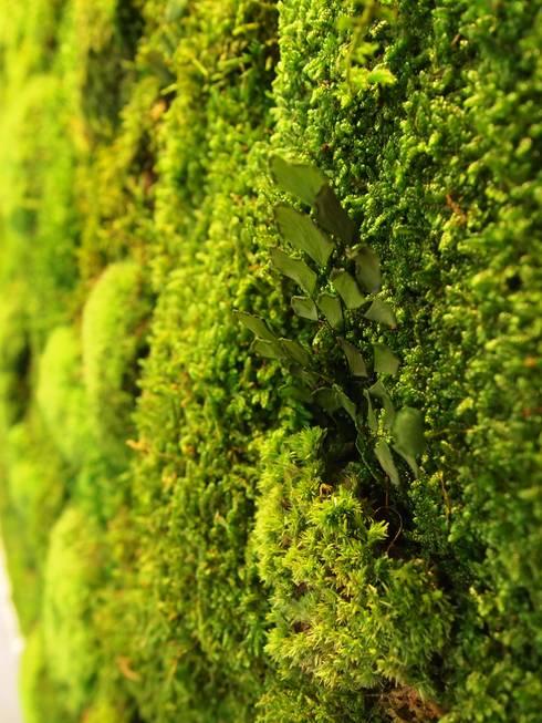 Jardin vertical planta preservada de arquigreen homify for Jardin vertical barato