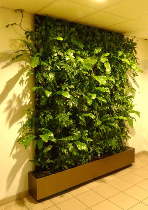 Mur végétal: Murs de style  par HYDROSMOSE