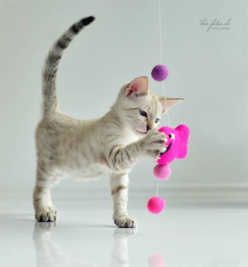 Casa  por stylecats®