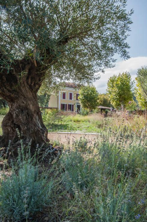 jardin haut: Jardin de style  par goodnova godiniaux