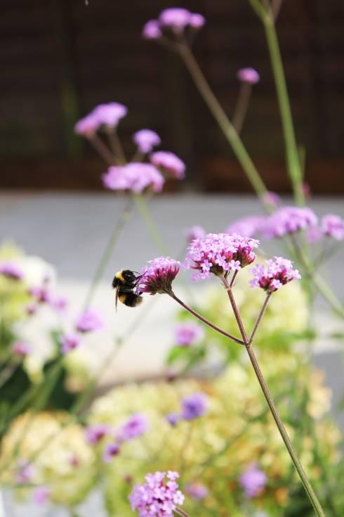Projekty,  Ogród zaprojektowane przez Boscolo