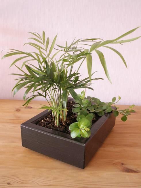 """Tischgarten """"Bergpalme"""":  Raumbegrünung von planbar! Garten. Wohnraum. Umwelt."""