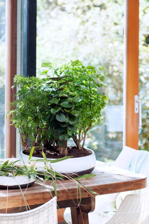 Paisajismo de interiores de estilo  por Pflanzenfreude.de