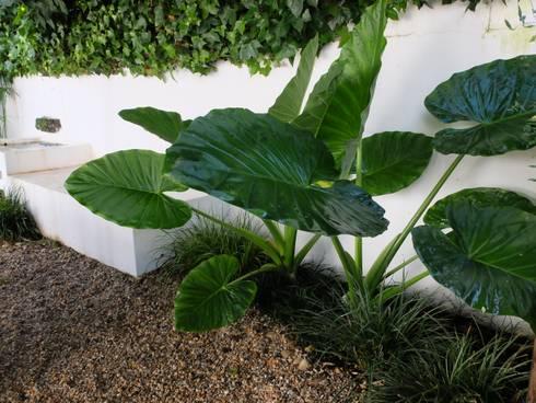 Pormenor: Jardins ecléticos por Atelier Jardins do Sul