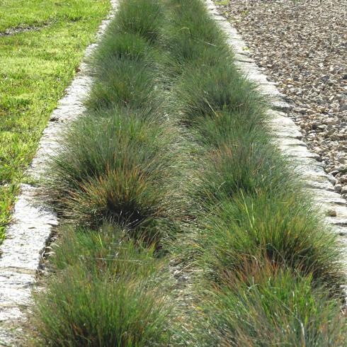 Jardim contemplativo em pedra: Jardins minimalistas por Atelier Jardins do Sul