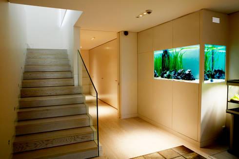 ADn freshwater aquarium: Corredor, hall e escadas  por ADn Aquarium Design