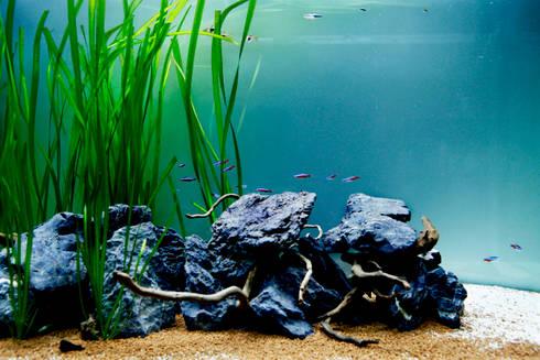 Adn freshwater aquarium - interior detail: Paisagismo de interior  por ADn Aquarium Design