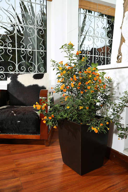 Matera Viridis 40cm Color Negra: Hogar de estilo  por Viridis Productos Eco Amigables