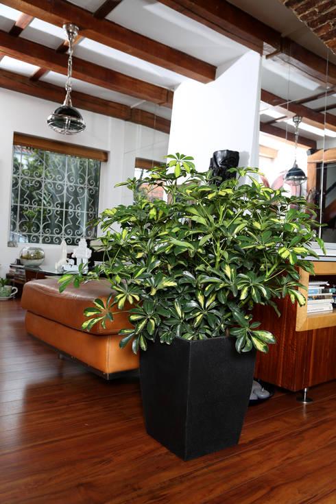 Matera Viridis 40cm Color Negra: Oficinas y tiendas de estilo  por Viridis Productos Eco Amigables