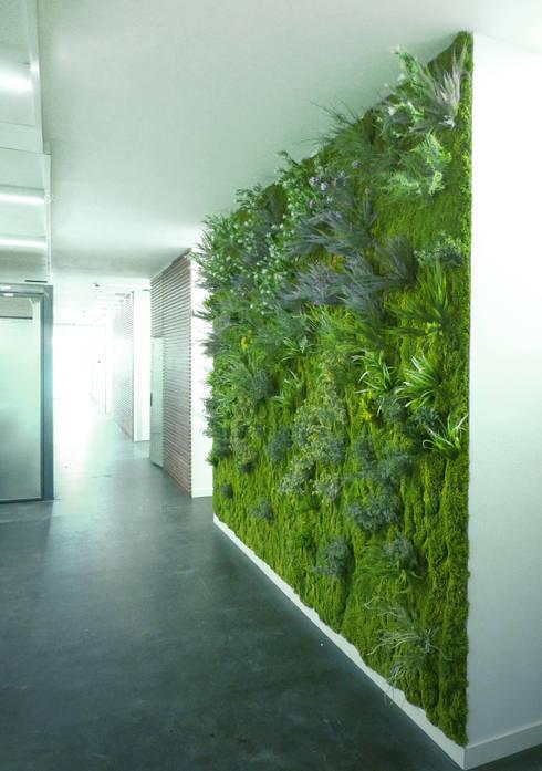 جدران تنفيذ Muros Frescos