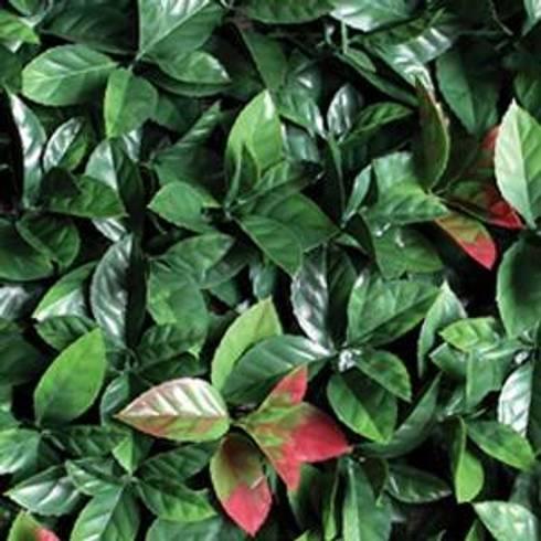 Leaf: Jardín de estilo  por ENFOQUE CONSTRUCTIVO