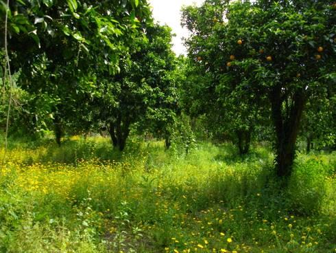 Venda de Quinta na Cidade de Coimbra:   por Green Lands