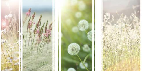 Imagens representativas : Jardins ecléticos por Trifolium LAA