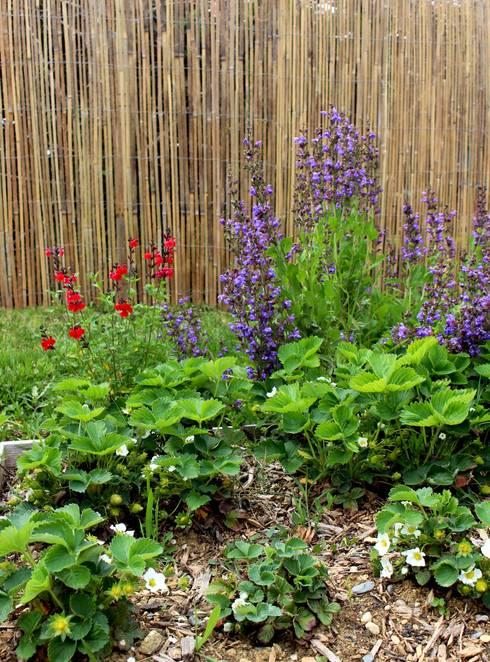 Sauges et fraisiers: Jardin de style  par Constans Paysage