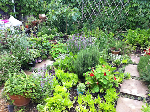 Herb garden: country Garden by Red Daffodil