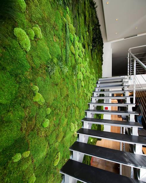 Vorstellung unserer Produkte: Pflanzen- und Moosbilder von styleGREEN: moderner Flur, Diele & Treppenhaus von FlowerArt GmbH | styleGREEN