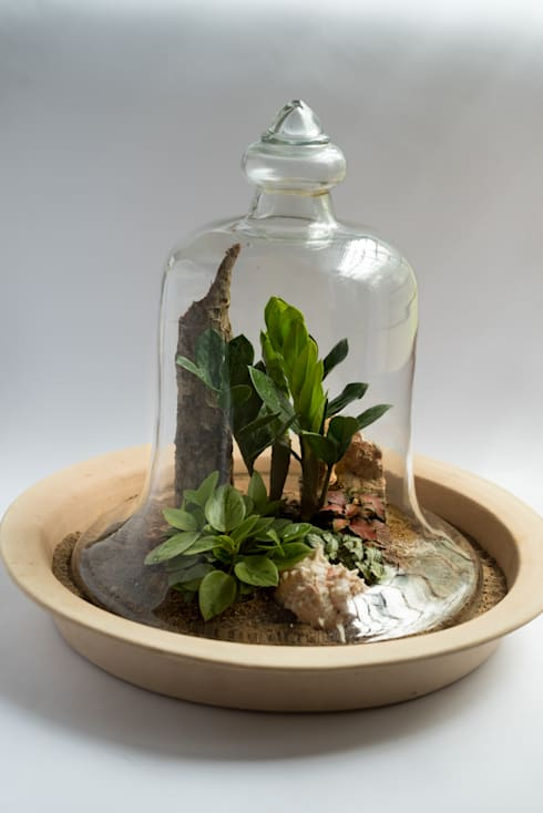 Terrariums:  Interior landscaping by Your Green Canvas