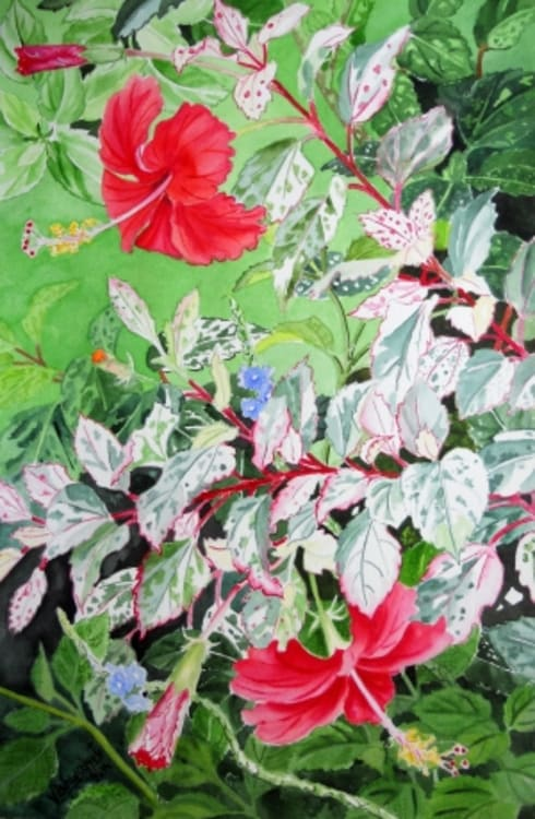 Red Hibiscus Variegated  :  Artwork by Indian Art Ideas