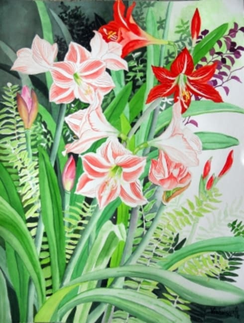 Amaryllis and Hippeastrum:  Artwork by Indian Art Ideas