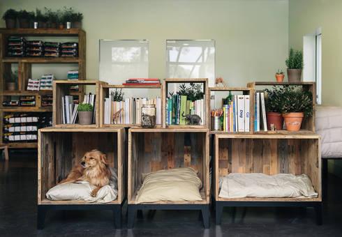 Sala de espera dos animais: Hospitais  por Arkstudio