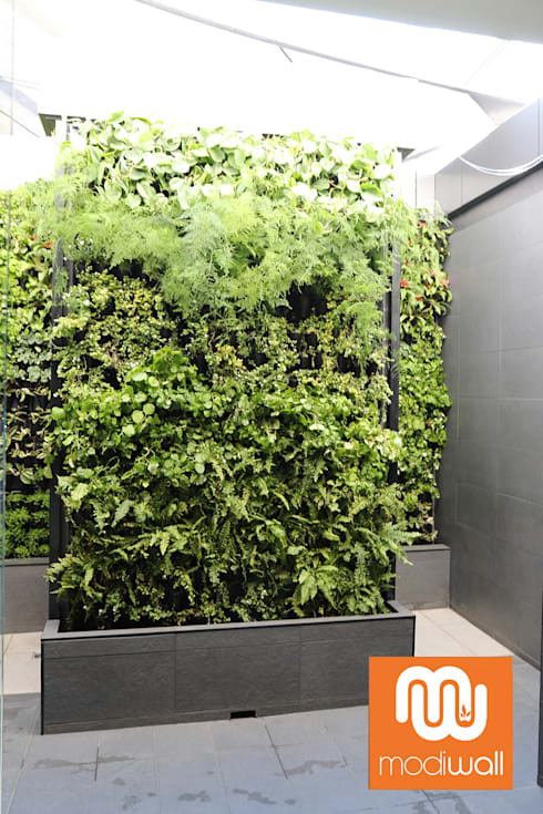 Virgin Active—Menlyn Maine:  Commercial Spaces by Modiwall Vertical Gardens