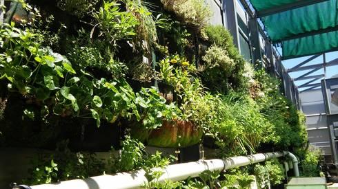Westin Hotel roof garden in its third summer… flowering!:  Balconies, verandas & terraces  by Vertical Veg (Pty) Ltd