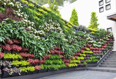 Muro verde pedregal nubes de regenera mx f brica for Muros verdes naturales